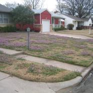 A Tulsa lawn with purple flowers in it.
