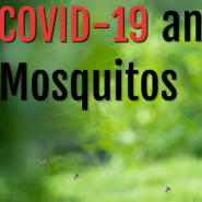 COVID-19 and mosquitos