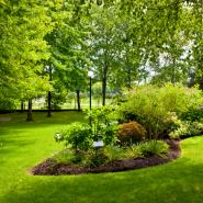healthy lush grass and shrubs